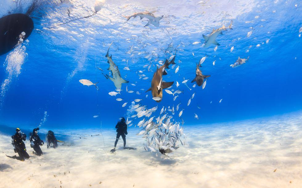 Впервые в своей истории карибский остров монтсеррат принимает на своих берегах фестиваль дайвинга