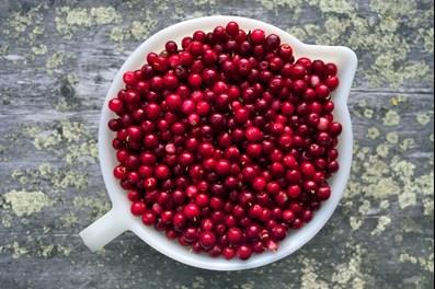 Summertime lapland berries