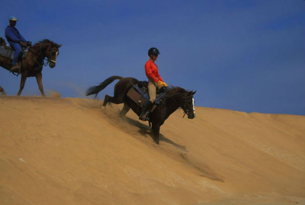 Horse riding on dune