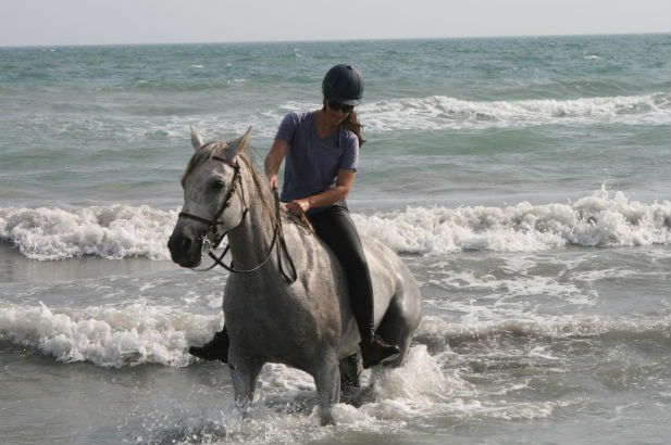 Horse riding swimming in the sea