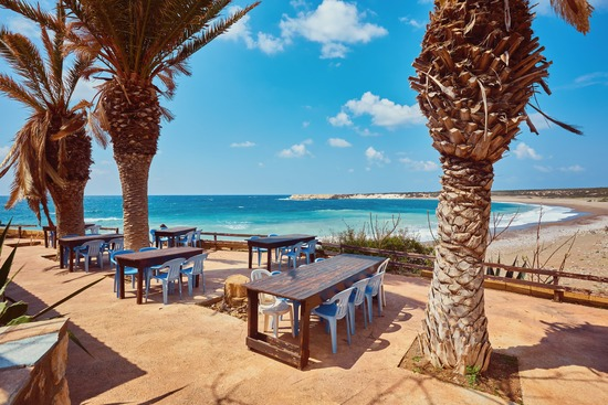 beach in Cyprus with palm tree