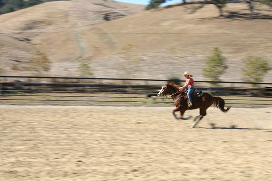 Care for a canter? Or maybe you'd prefer to go for a gallop? The Lone Star State is the best place for you!