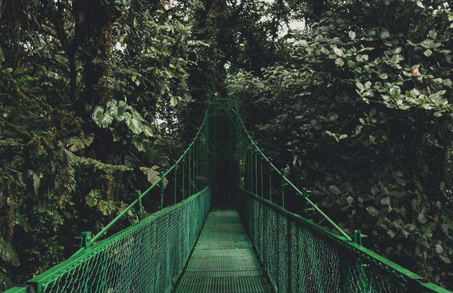 A green bridge leading into the forestry of Costa Rica